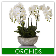 Artificial plants adelaide artificial flowers in sa artificial plant shop is adelaides 1 distributor of life like artificial plants and artificial flowers we deliver the best quality artificial palms mightylinksfo
